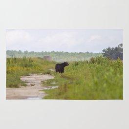 Adult Black Bear Rug