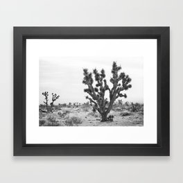 joshua tree bw Framed Art Print