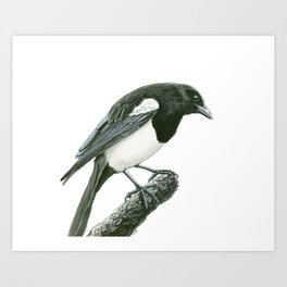 Magpie ink painting Art Print