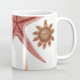 Starfish varieties set  from Resultats des Campagnes Scientifiques by Albert I Prince of Monaco (184 Coffee Mug