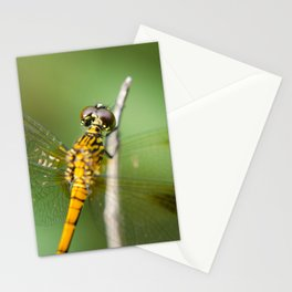 Dragonfly at Bombay Hook Animal / Wildlife Photograph Stationery Cards
