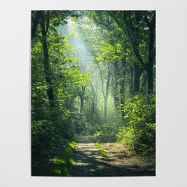 Woodland Glory Poster