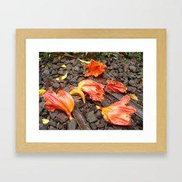 Fallen Beauty  Framed Art Print