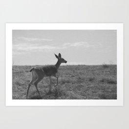 Fawn Art Print