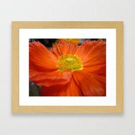 Eye Popping Poppy Framed Art Print