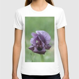 Iris haynei T-shirt