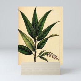 Long-leaved Bay Willow, salix pentandra Redoute Roses 3 Mini Art Print