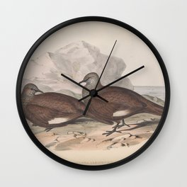 White-quilled Rock Dove, petrophassa albipennis3 Wall Clock