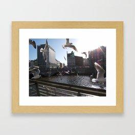 Dublin City Seagulls (Liffey) Framed Art Print