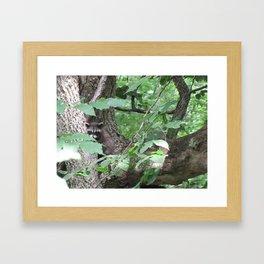 In Plain Sight Framed Art Print
