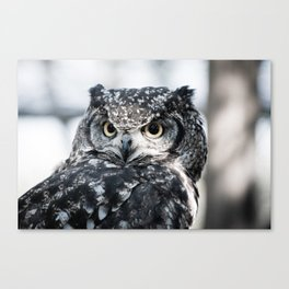 Spotted Eagle-Owl Canvas Print
