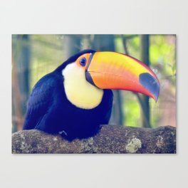 Colorful Toco Toucan Canvas Print