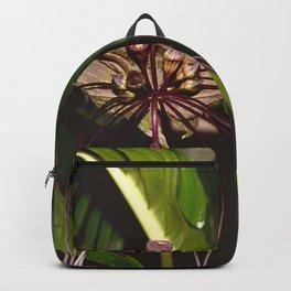 Black Bat Flower - Tacca chantrieri Backpack