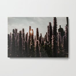 Dutch flower field at sunset   Colourful Travel Photography   Hoge Veluwe, Holland (The Netherlands) Metal Print