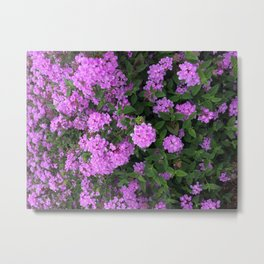 Sring, blooming Metal Print