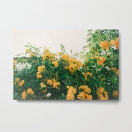 yellow flowery bush 'bougainvillea' in the algarve, Portugal  | Photo Print, Travel Photography Europe Metal Print