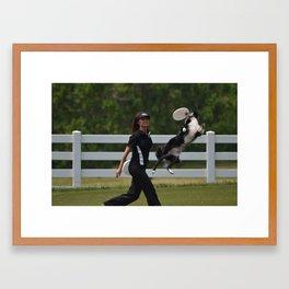 Border Collie In Action Framed Art Print