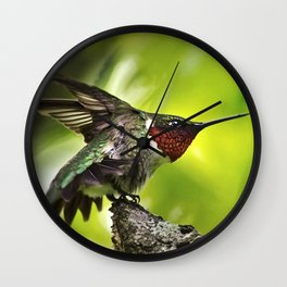 Hummingbird Dominance Wall Clock