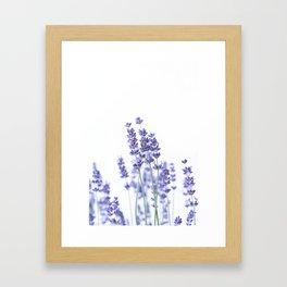 Fresh Lavender #2 #decor #art #society6 Framed Art Print