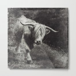 Scottish Highland Cow - Highlander Metal Print