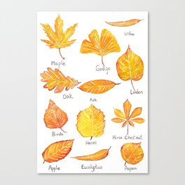 yellow leaves collection Canvas Print