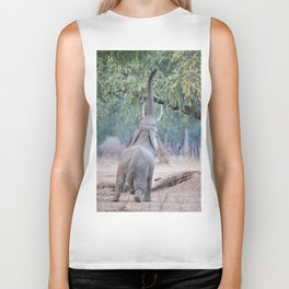 Elephant reaching for Acacia tree Biker Tank