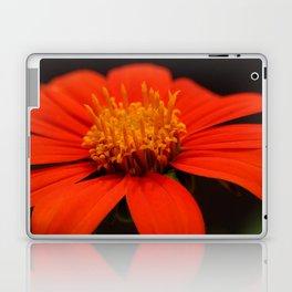 Red African Daisy Laptop & iPad Skin