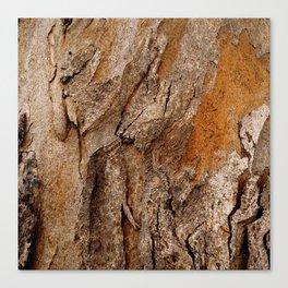 Eucalyptus Tree Bark Texture Canvas Print