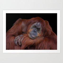 Unconcerned Orangutan Art Print