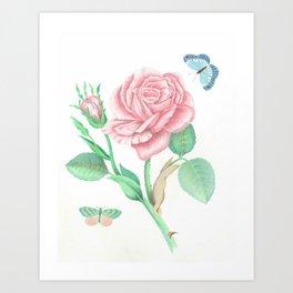 Rose and Butterflies Art Print