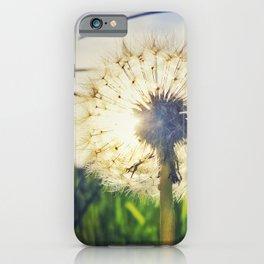 Dandelion Dreamin' iPhone Case