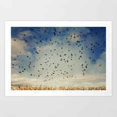 Harvest birds Art Print