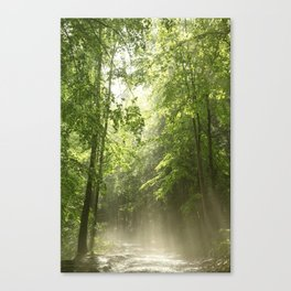 Spring Forest Mist Canvas Print
