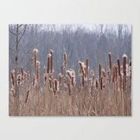 furry Canvas Prints featuring Furry Cattails by DanByTheSea