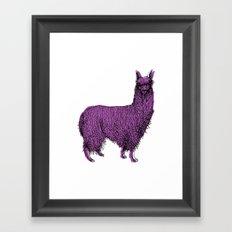 suri alpaca Framed Art Print