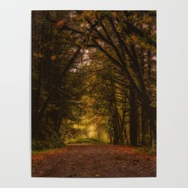 Covered Road Poster
