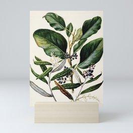 Antique plant Griselinia lucida drawn by Sarah Featon (1848-1927) Mini Art Print