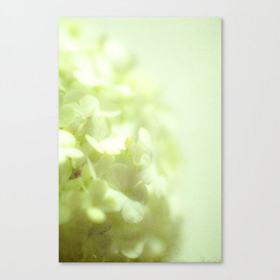 {delicate} Canvas Print