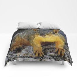 Jeronimo Rubio Photography - Peanut the Squirrel (1) Comforters