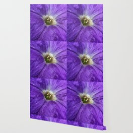 Purple Petunia Wallpaper