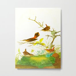 Winter Wren and Rock Wren Bird Metal Print
