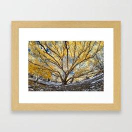 Gorgeous Big Tree Framed Art Print