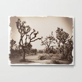 Joshua Tree Road Metal Print