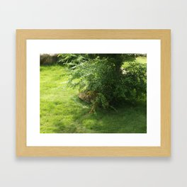 Beautiful Tiger Framed Art Print