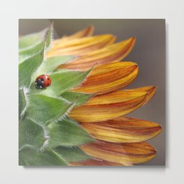 Ladybug on Sunflower Metal Print