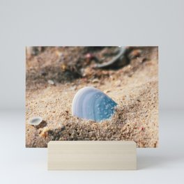 Sea Shell. Hawks Nest. NSW. Australia. Mini Art Print