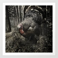 Tom Feiler Turkey Art Print