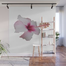 Pale Pink Hibiscus Tropical Flower No Text Wall Mural