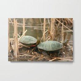 Pair of Painted Turtles Metal Print