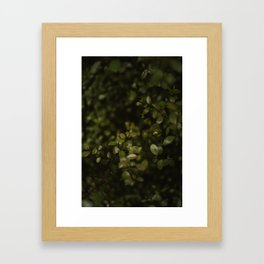 Maidenhair Vine Plant Printable Wall Art   Floral Flower Botanical Nature Outdoors Macro Photography Print Framed Art Print